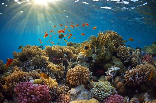 coral-reef-537x356